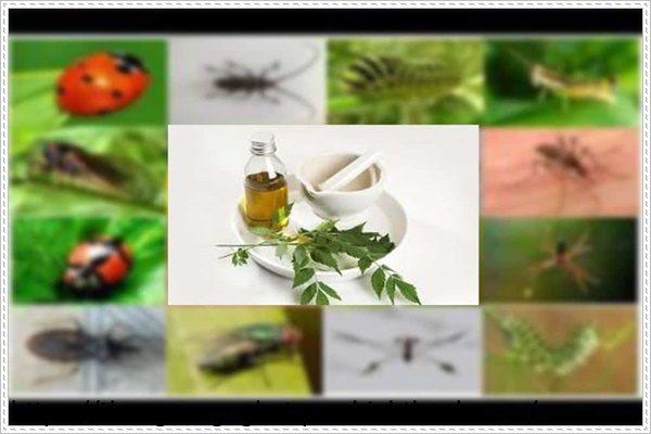 Dùng thuốc để diệt côn trùng trong đất trồng cây